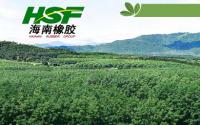 海南橡胶斥巨资助力子公司稳步发展